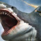 Syfy nage avec les requins pour le marathon cinématographique `` One Last Bite of Summer ''