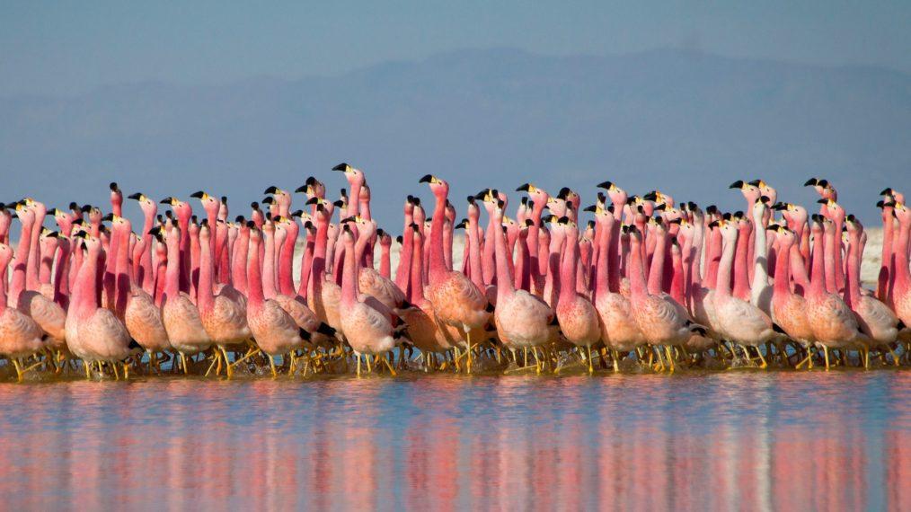 La musique joyeuse et la faune abondent dans 'Planet Earth: A Celebration' (VIDEO)