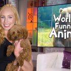 Les animaux les plus drôles du monde