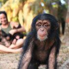 'Baby Chimp Rescue': Rencontrez la famille inhabituelle derrière la série BBC 'Joyous'