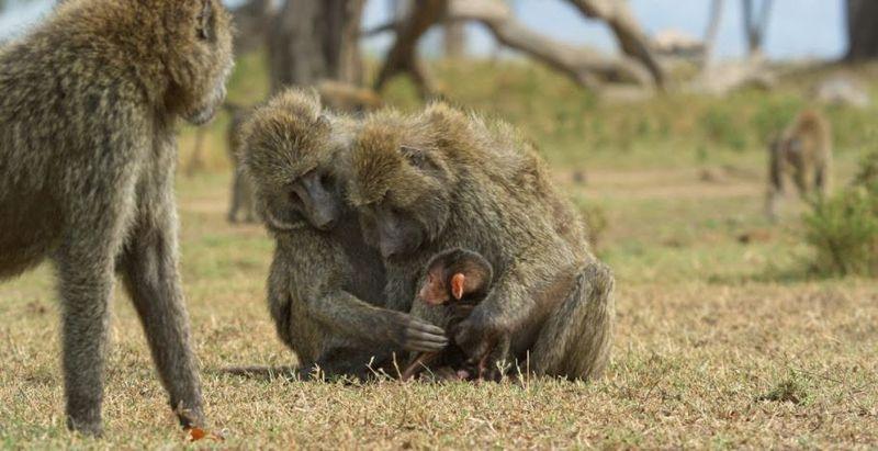 Serengeti : la deuxième saison de la série Animal arrive sur Discovery Channel