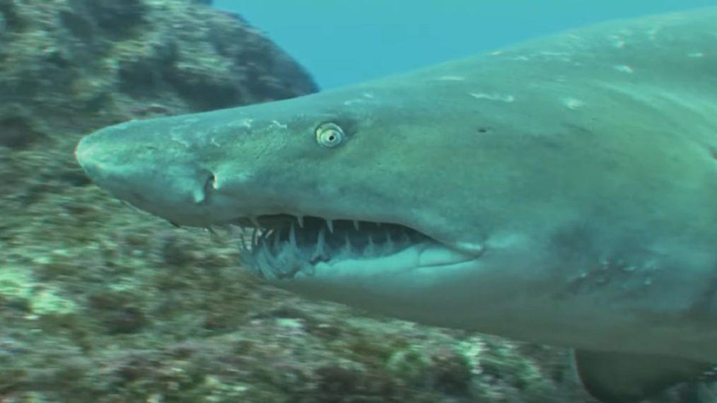 Nat Geo met un tour sur le thème 'The Golden Girls' pour SharkFest (VIDEO)