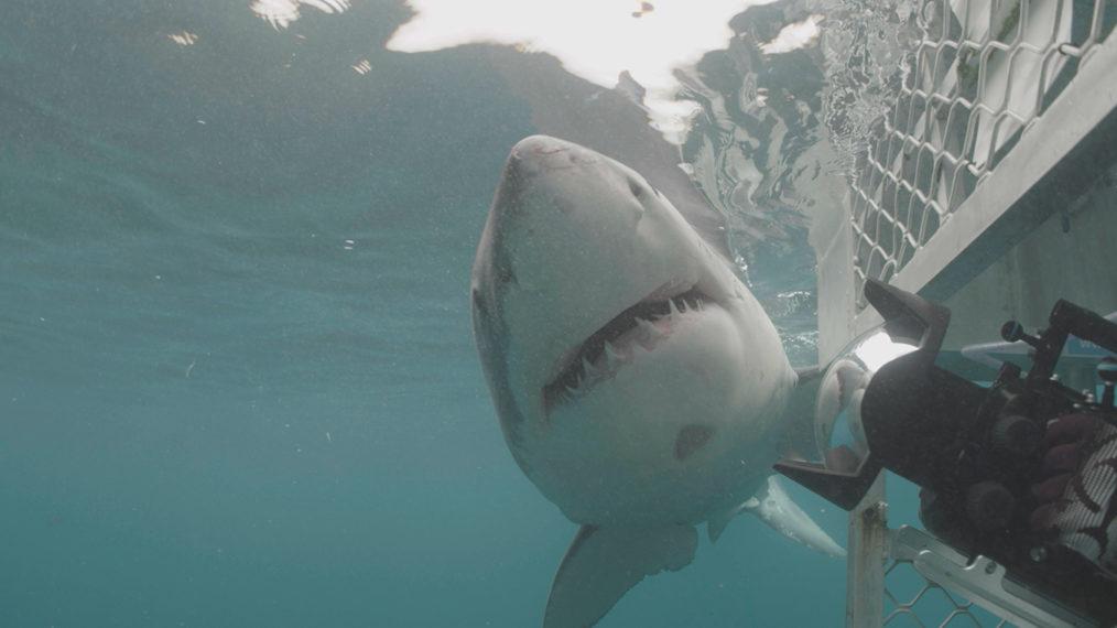 'Air Jaws', 'Orca vs. Great White' et plus de promotions célébrant les superlatifs