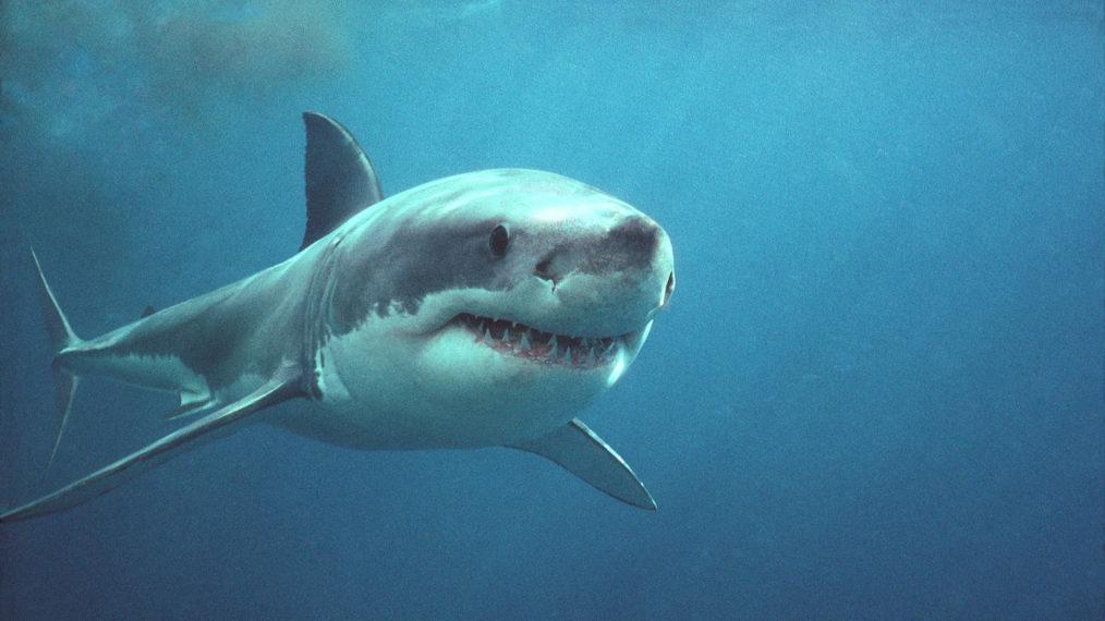 Shark Week & SharkFest : 6 nouveautés & 6 classiques à ne pas manquer