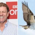 Sean Bean va raconter un documentaire sur la faune d'Osprey Raptor pour PBS