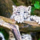 Le zoo : saison cinq ;  La série Animal Planet est renouvelée et revient le mois prochain (regarder)